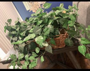 $15 or best offer - fake plants with basket for Sale in Houston, TX
