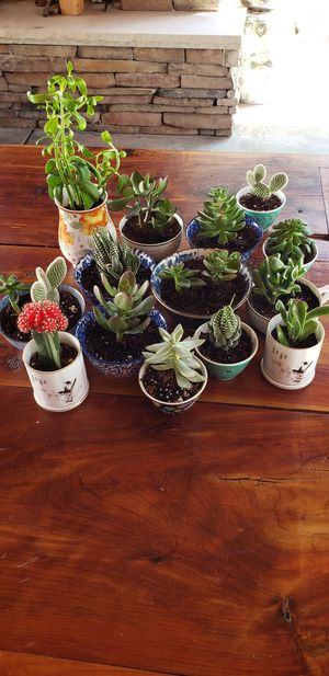 Variety of Potted Plants for Sale in Smyrna, TN
