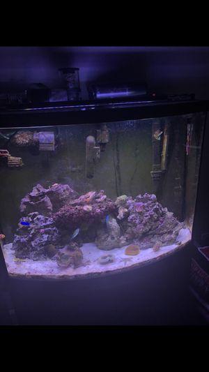 Aquarium for Sale in Tampa, FL