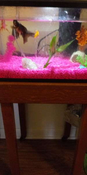 5 gallon tank stand and all accessories for Sale in Sidney, OH