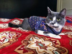 Dog/ cat sweater and collar for Sale in Fontana, CA