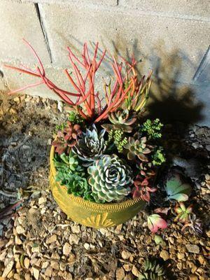 Easter Succulent arrangements for Sale in San Marcos, CA
