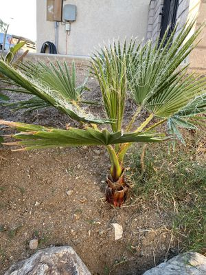 Free Palms! for Sale in Riverside, CA