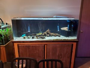 90 acrylic tank full setup for Sale in Lynnwood, WA