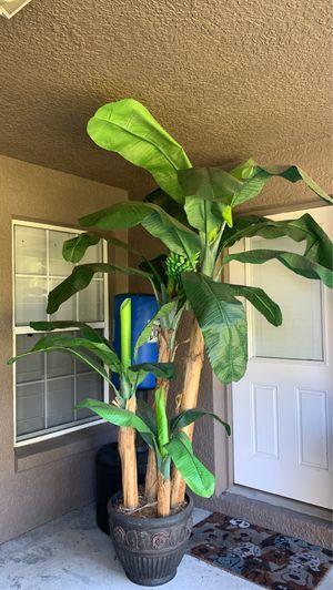 Silk banana plant for Sale in Orlando, FL