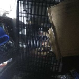 4x3ft dog crate for Sale in Phoenix, AZ