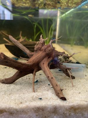 Spider driftwood , ceramic log, plants, vinegar eels starter culture for Sale in Hacienda Heights, CA