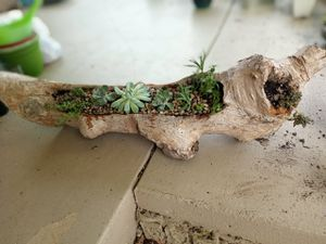 Tree trunk made by hand ..tronco echo a mano for Sale in Fort Worth, TX