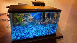 5 Gallon Aquarium w Light & Filter for Sale in Plano, TX