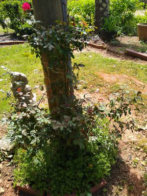 Potted plants for Sale in Greenville, SC
