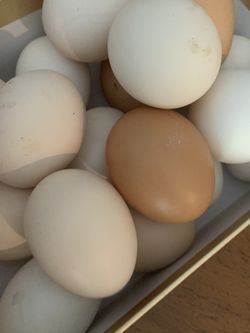 Organic, Caged free Eggs for Sale in Hacienda Heights,  CA
