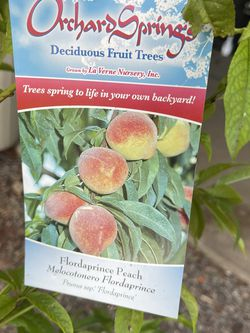 Peach Tree / Arbol De Durazno for Sale in Mission Hills, CA