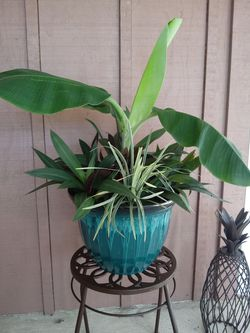 Potted plants your design or mine for Sale in Babson Park,  FL