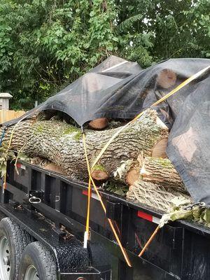 Free Fire Wood for Sale in Nashville, TN