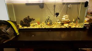 55 gal. Fish tank w/w.o. the fish for Sale in Joint Base Lewis-McChord, WA