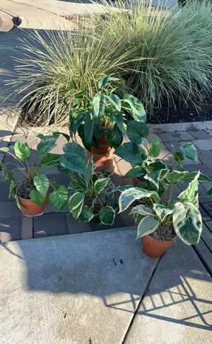 fake potted plants for Sale in Livermore, CA