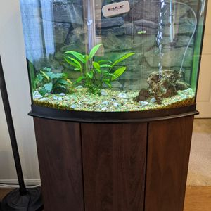 Aquarium - 36 Gallons, Fully Equipped + Stand for Sale in Santa Clara, CA