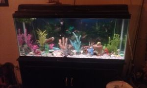 55 gallon aquarium and stand for Sale in NC, US