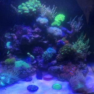 32 Biocube for Sale in Land O Lakes, FL