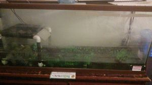 55 gallon fish tank with accessories for Sale in Piedmont, CA