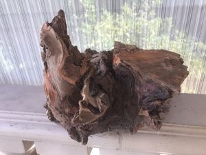 Massive Driftwood for Sale in Los Angeles, CA