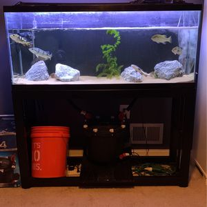 55 Gallon Fish Tank for Sale in Alexandria, VA