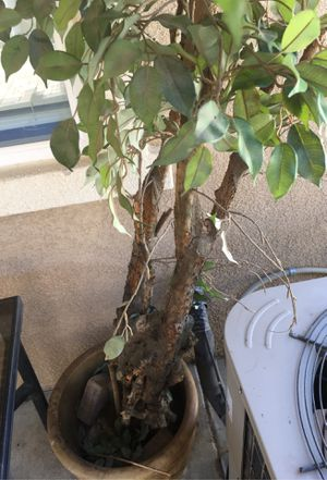 Fake tree for Sale in Perris, CA