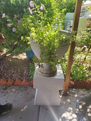 plant for Sale in Avondale, AZ