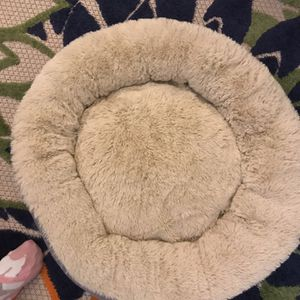 Cat Bed for Sale in Pawtucket, RI