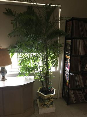 Real Bamboo Plant In An Asian Antique Pot for Sale in Coral Gables, FL