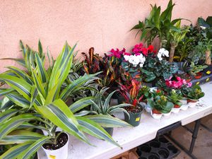 Plants succulents cactus and soil sold in Norwalk. Prices vary. for Sale in Norwalk, CA