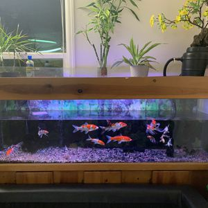 Fishs And Tank for Sale in Alameda, CA