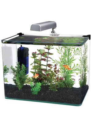 10 g tank with light (no filter) for Sale in Philadelphia, PA
