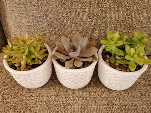 Succulents in white pots for Sale in North Las Vegas, NV