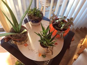 Indoor plants for Sale in Salem, OR