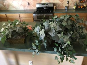 Green Foliage Plants with Metal Holders for Sale in Peoria, AZ
