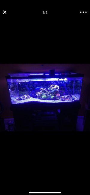 75 gallons fish tank aquarium for Sale in Burke, VA