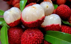 Lychee plants 🙂🙂😃😃😃🌿🌿🌿 for Sale in Los Angeles, CA