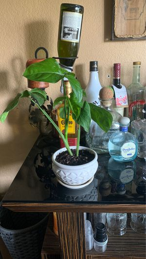 Plant 🌱 for Sale in Whittier, CA