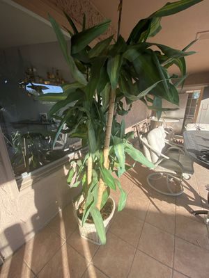 Bamboo fake plant for Sale in Phoenix, AZ