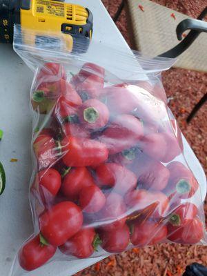Chile peron o manzano del rojo recien cortado for Sale in Milpitas, CA