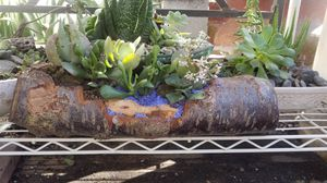 Handcrafted oakwood flower pot with 4 succulents for Sale in Lodi, CA