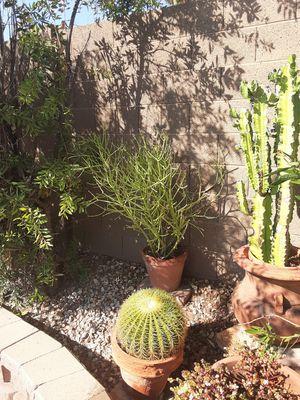 Plants, fire sticks for Sale in Scottsdale, AZ