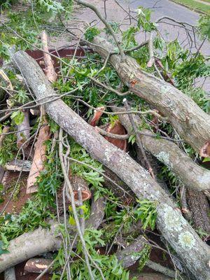 Free firewood for Sale in Gibbsboro, NJ