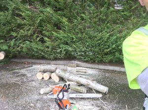 Cotton wood. Free fire wood. for Sale in Sammamish, WA