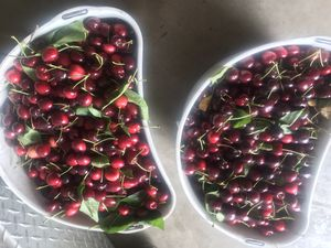 Cherries for Sale in Modesto, CA