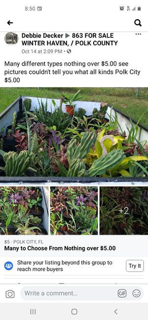Over 30 potted plant's all for $75.00 come pick up Polk City for Sale in Auburndale, FL