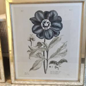 Set of Beautiful Willam Stafford Botanical Prints for Sale in Alexandria, VA