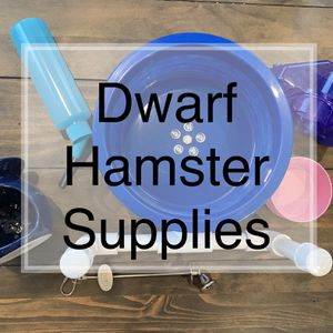 Dwarf Hamster Supplies for Sale in San Jose, CA
