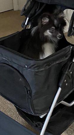 Dog Stroller for Sale in Riverview,  FL